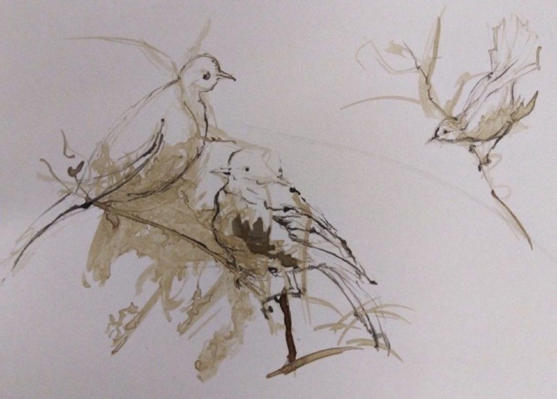 Oiseaux – Lithographie – 40×50