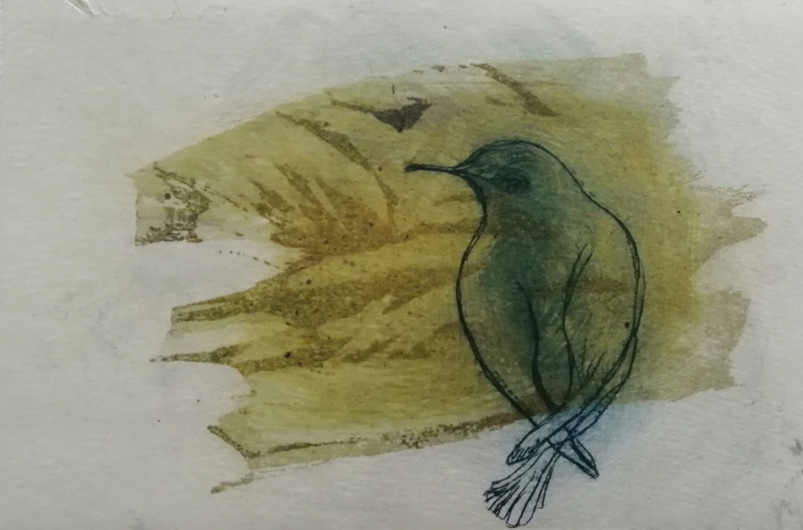 L'oiseau vert – Eau forte et burin – 15×20