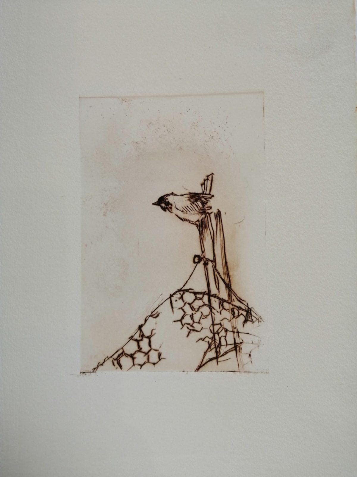 Oiseau perché- 2- Burin 10×15